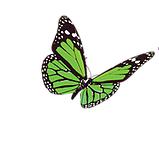 Registry Butterfly